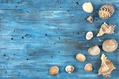 Blauwe achtergrond met overzeese shells Stock Foto's