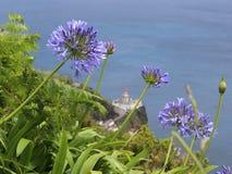 Blauwe agapanthusbloemen tegen de vuurtoren en de oceaan royalty-vrije stock foto