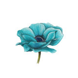 Blauwe anemoon Stock Fotografie