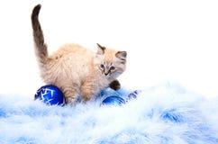 Blauwe bal, decoratie van het nieuwe jaar Royalty-vrije Stock Foto's