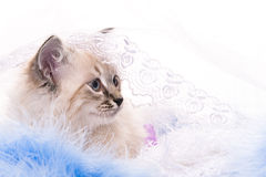 Blauwe bal, decoratie van het nieuwe jaar Royalty-vrije Stock Afbeelding