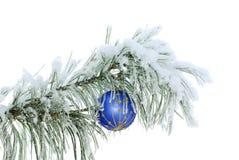 Blauwe bal op sneeuwpijnboomtak Royalty-vrije Stock Foto's