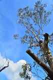 Blauwe Berg 8 stock foto