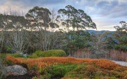 Blauwe bergen Australië Stock Afbeelding
