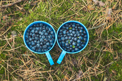 Blauwe Bessen in plastic koppen Stock Fotografie