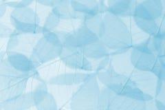 Blauwe bladerenachtergrond royalty-vrije stock foto