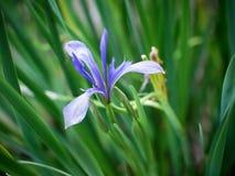 Blauwe bloem stock foto's