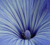 Blauwe Bloem Royalty-vrije Stock Foto's