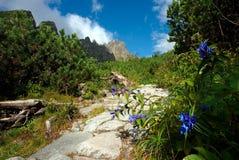 Blauwe bloem in bergen Stock Fotografie