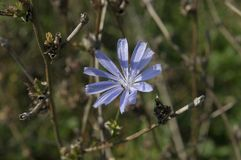 Blauwe bloem in de tak Royalty-vrije Stock Fotografie