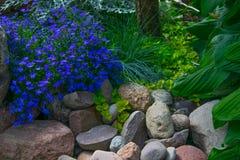 Blauwe bloem in de tuin Stock Afbeeldingen