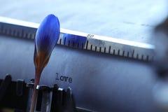 Blauwe bloem dichtbij boekroman Royalty-vrije Stock Afbeelding
