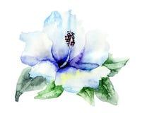 Blauwe bloem Hibiskus vector illustratie