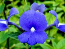 Blauwe bloem op groene achtergrond Stock Foto
