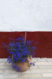Blauwe bloem vóór de muur Stock Afbeeldingen