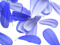 Blauwe bloemblaadjes stock foto