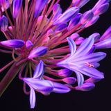 Blauwe bloemclose-up royalty-vrije stock afbeeldingen