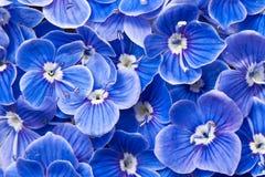 Blauwe Bloemen stock foto's