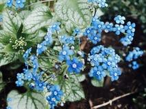 Blauwe Bloemen Royalty-vrije Stock Foto