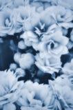 Blauwe Bloemen Royalty-vrije Stock Afbeeldingen