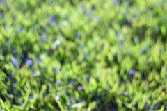 Blauwe bloemen bij het groene onduidelijke beeld van het de zomergras Stock Foto's
