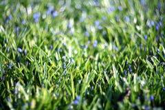 Blauwe bloemen bij het groene onduidelijke beeld van het de zomergras Royalty-vrije Stock Fotografie
