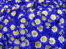 Blauwe bloemen, bloemblaadjesconcept, aard, Royalty-vrije Stock Foto's