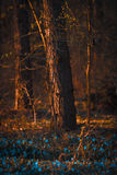 Blauwe bloemen in het bos Stock Foto