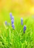 Blauwe bloemen op een weide Royalty-vrije Stock Afbeeldingen
