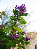Blauwe bloemen op grote struik Royalty-vrije Stock Afbeelding