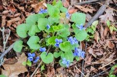 Blauwe Bloemen op Weg Stock Afbeelding