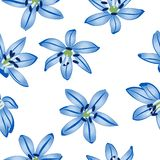 Blauwe bloemen op witte achtergrond. Stock Fotografie
