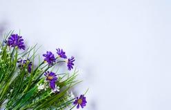 Blauwe bloemen op witte achtergrond stock foto