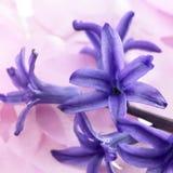 Blauwe bloemen in pastelkleurrug royalty-vrije stock foto