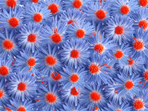 Blauwe bloemen voor decoratie royalty-vrije stock foto