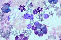 Blauwe bloemillustratie Royalty-vrije Stock Afbeelding