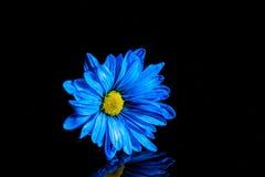 Blauwe bloemmacro Royalty-vrije Stock Afbeeldingen