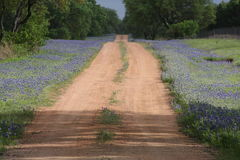 Blauwe Bonnet gevoerde Landweg stock foto