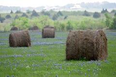Blauwe bonnetten Royalty-vrije Stock Foto's