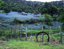 Blauwe Bonnetten door Stroom een Omheining Royalty-vrije Stock Fotografie