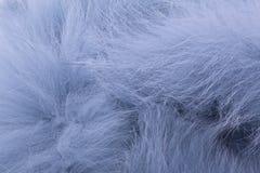 Blauwe bontstole Stock Fotografie