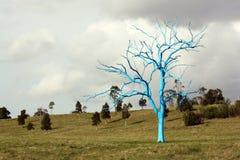 Blauwe boom Stock Foto