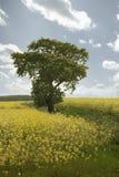 Blauwe boom -, groen, geel Stock Fotografie