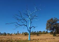 Blauwe Boom in Park Royalty-vrije Stock Foto