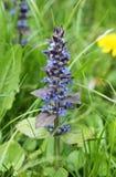 Blauwe bugel royalty-vrije stock fotografie