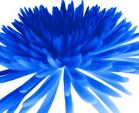 Blauwe chrysant. Stock Foto's