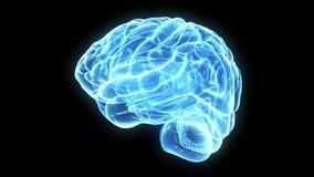 Blauwe 3d hersenen stock illustratie