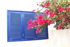 Blauwe de Bougainvilleabloemen van de blinden witte muur Stock Afbeeldingen