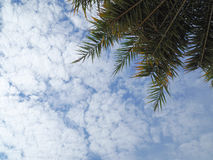 Blauwe de hemelachtergrond van de kokosnotenpalm Royalty-vrije Stock Afbeeldingen