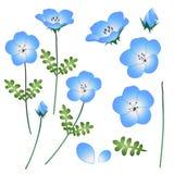 Blauwe de Ogenbloem van de Nemophilababy Vector illustratie Geïsoleerdj op witte achtergrond Royalty-vrije Stock Afbeeldingen